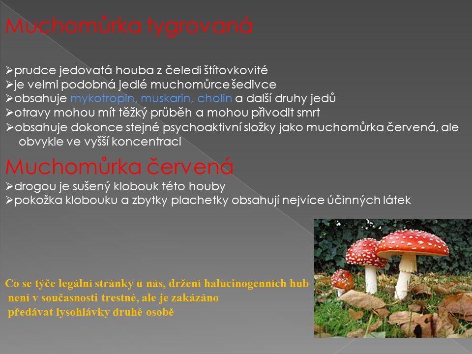 Muchomůrka tygrovaná  prudce jedovatá houba z čeledi štítovkovité  je velmi podobná jedlé muchomůrce šedivce  obsahuje mykotropin, muskarin, cholin