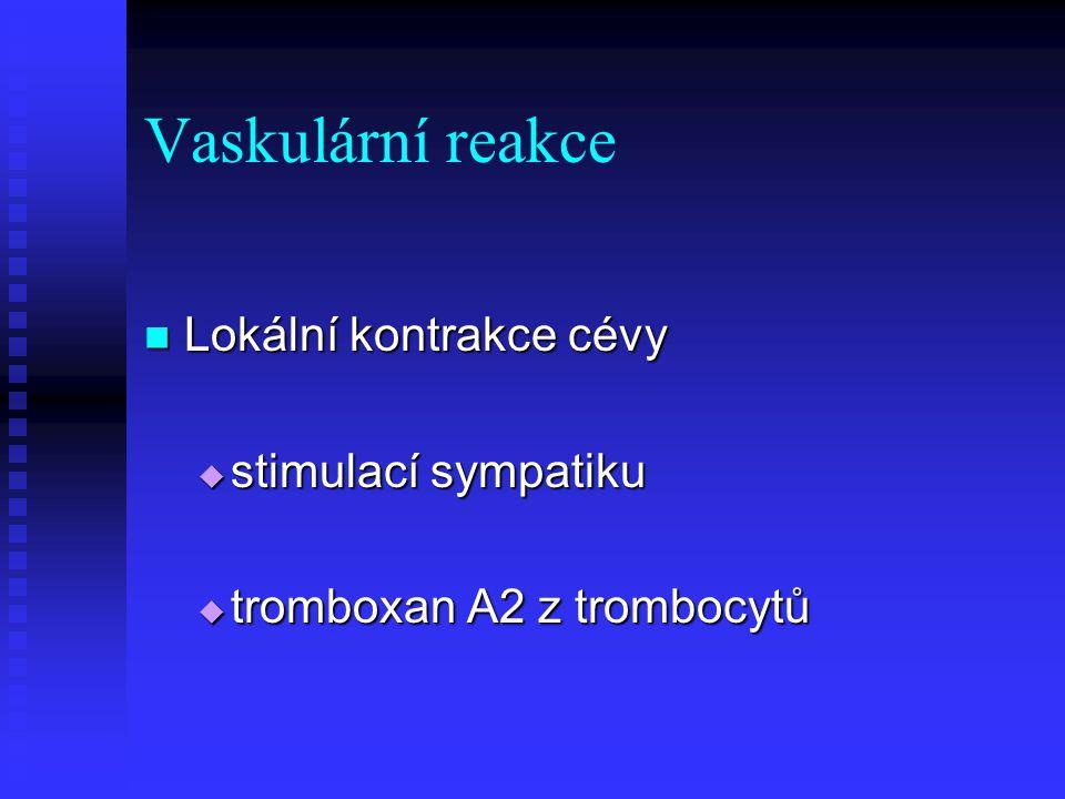 Vaskulární reakce Lokální kontrakce cévy Lokální kontrakce cévy  stimulací sympatiku  tromboxan A2 z trombocytů
