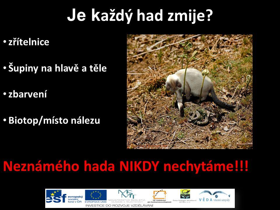 zřítelnice Šupiny na hlavě a těle zbarvení Biotop/místo nálezu Neznámého hada NIKDY nechytáme!!.
