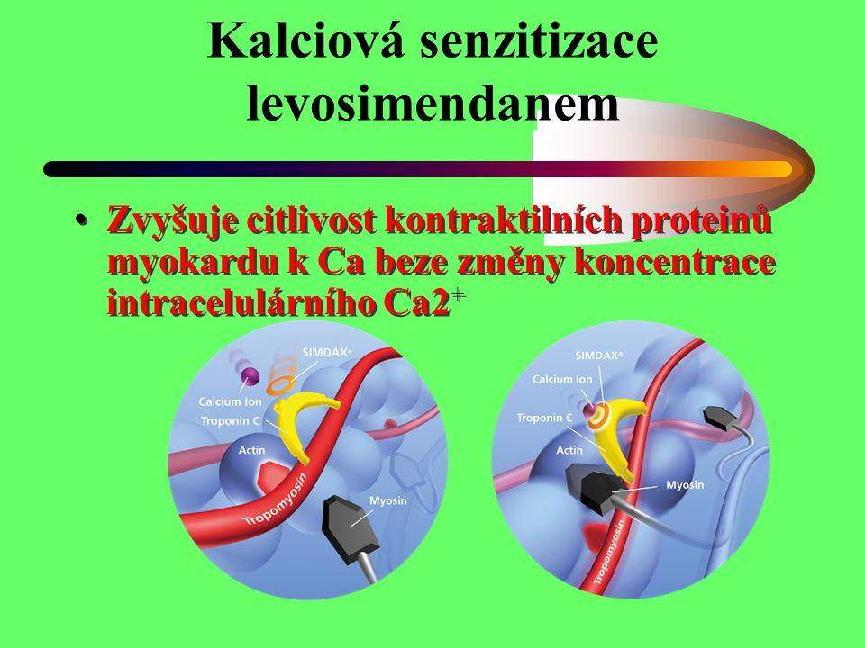 Kalciová senzitizace levosimendanem Zvyšuje citlivost kontraktilních proteinů myokardu k Ca beze změny koncentrace intracelulárního Ca2 +
