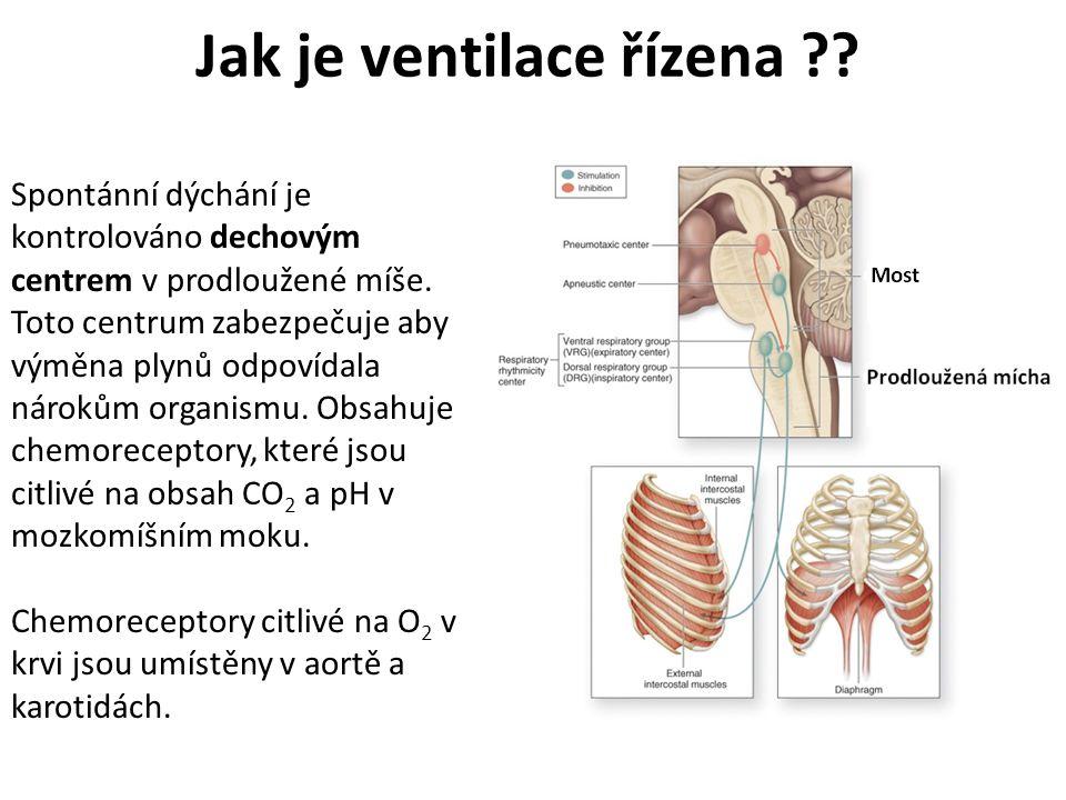 Jak je ventilace řízena ?? Spontánní dýchání je kontrolováno dechovým centrem v prodloužené míše. Toto centrum zabezpečuje aby výměna plynů odpovídala