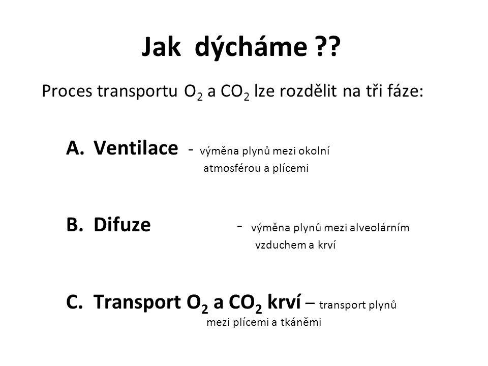 Jak dýcháme ?? Proces transportu O 2 a CO 2 lze rozdělit na tři fáze: A.Ventilace - výměna plynů mezi okolní atmosférou a plícemi B.Difuze - výměna pl