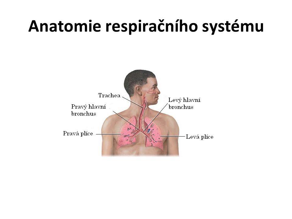 Anatomická klasifikace HCD 1.Horní cesty dýchací (HCD) - transport vzduch do dolních cest dýchacích - úprava vzduchu (zvlhčení, zahřátí, očištění) Nos Nasopharynx (nosohltan) Paranasální sinusy DCD 2.Dolní cesty dýchací (DCD) Larynx (hrtan) Tracheobronchiální strom Plicní parenchym