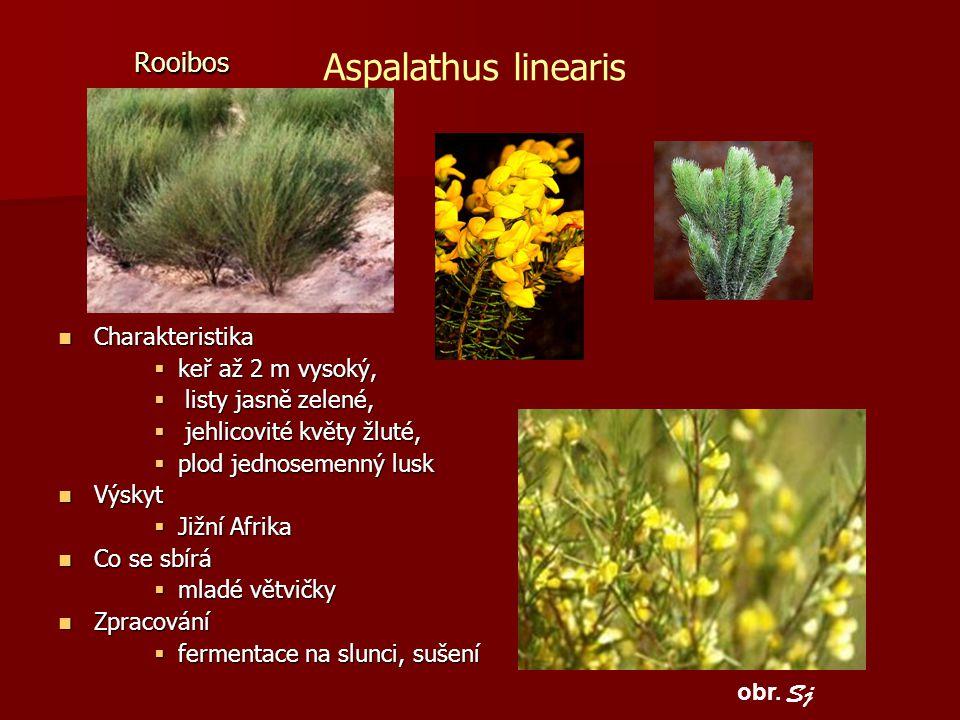 Rooibos Charakteristika Charakteristika  keř až 2 m vysoký,  listy jasně zelené,  jehlicovité květy žluté,  plod jednosemenný lusk Výskyt Výskyt 