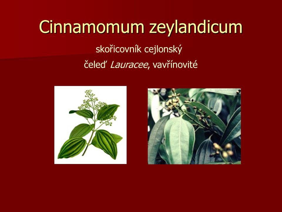 Cinnamomum zeylandicum skořicovník cejlonský čeleď Lauracee, vavřínovité