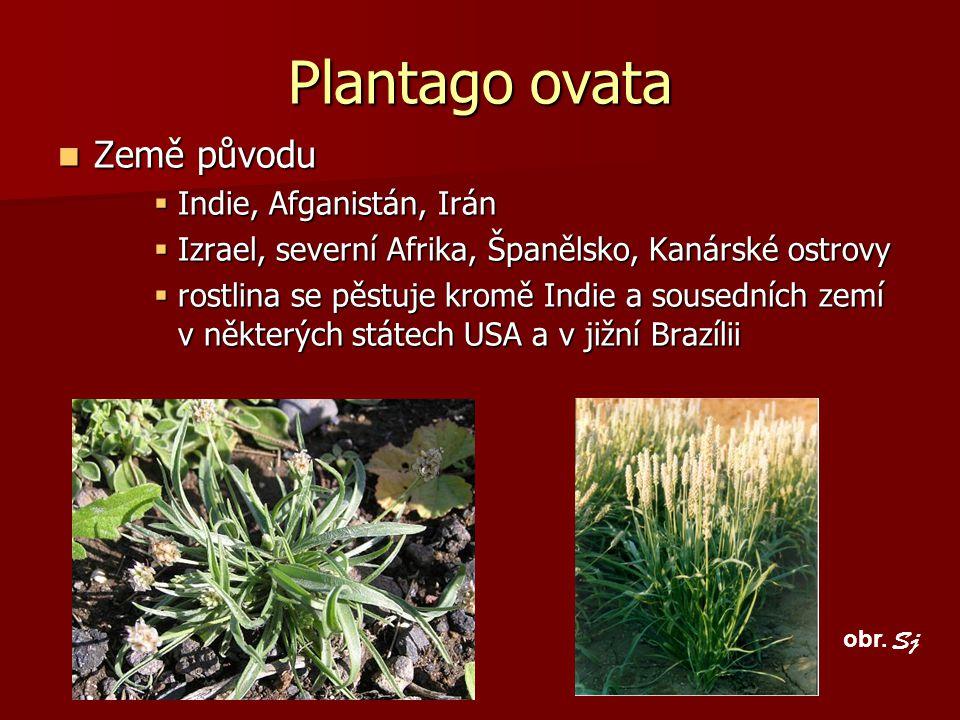 Plantago ovata Země původu Země původu  Indie, Afganistán, Irán  Izrael, severní Afrika, Španělsko, Kanárské ostrovy  rostlina se pěstuje kromě Ind