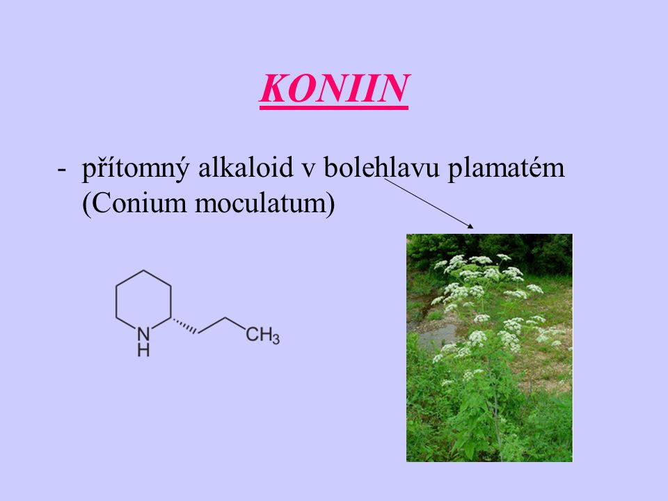 KONIIN -přítomný alkaloid v bolehlavu plamatém (Conium moculatum)