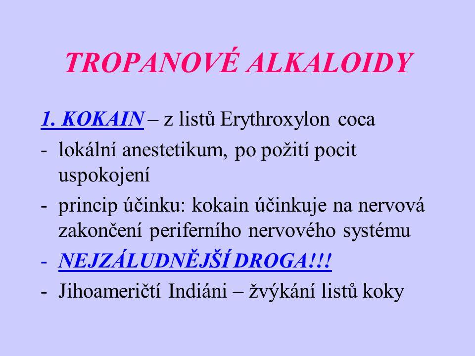 TROPANOVÉ ALKALOIDY 1. KOKAIN – z listů Erythroxylon coca -lokální anestetikum, po požití pocit uspokojení -princip účinku: kokain účinkuje na nervová