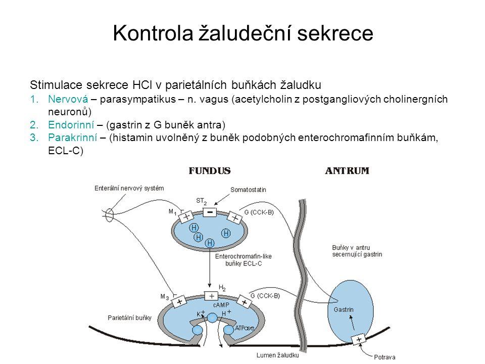 Kontrola žaludeční sekrece Stimulace sekrece HCl v parietálních buňkách žaludku 1.Nervová – parasympatikus – n. vagus (acetylcholin z postgangliových
