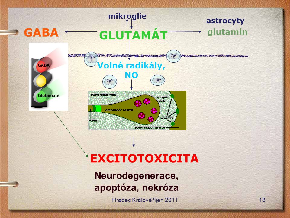mikroglie GLUTAMÁT glutamin GABA Ca 2+ Volné radikály, NO EXCITOTOXICITA Neurodegenerace, apoptóza, nekróza astrocyty Ca 2+ Hradec Králové říjen 20111