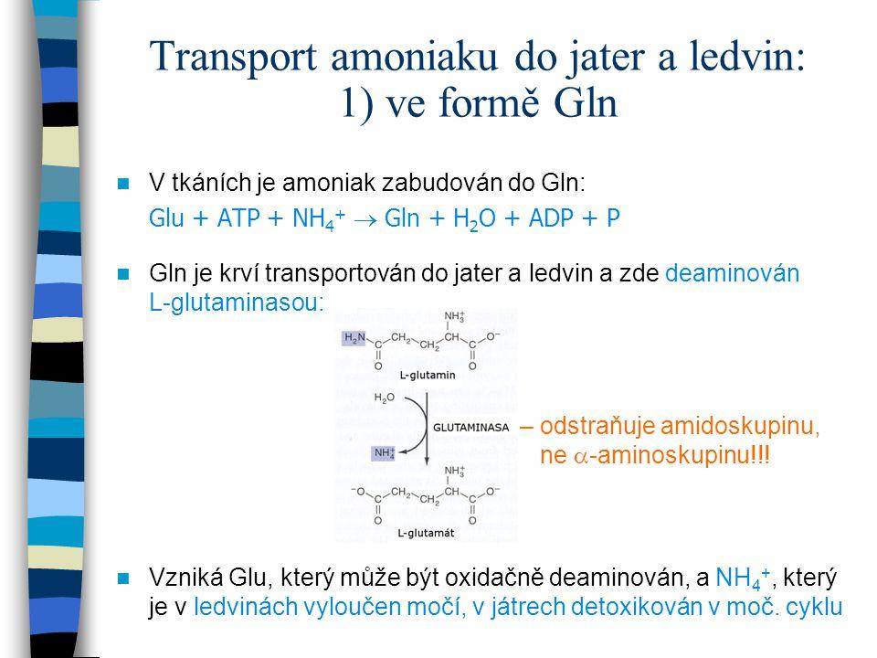 Transport amoniaku do jater a ledvin: 1) ve formě Gln V tkáních je amoniak zabudován do Gln: Glu + ATP + NH 4 +  Gln + H 2 O + ADP + P Gln je krví tr