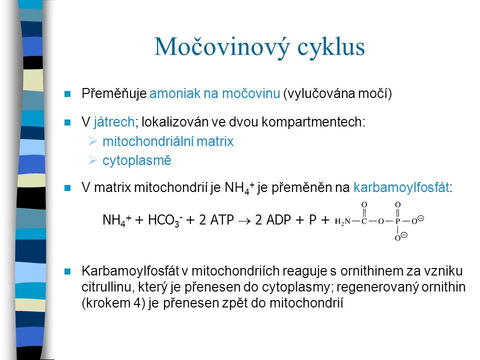 Močovinový cyklus Přeměňuje amoniak na močovinu (vylučována močí) V játrech; lokalizován ve dvou kompartmentech:  mitochondriální matrix  cytoplasmě