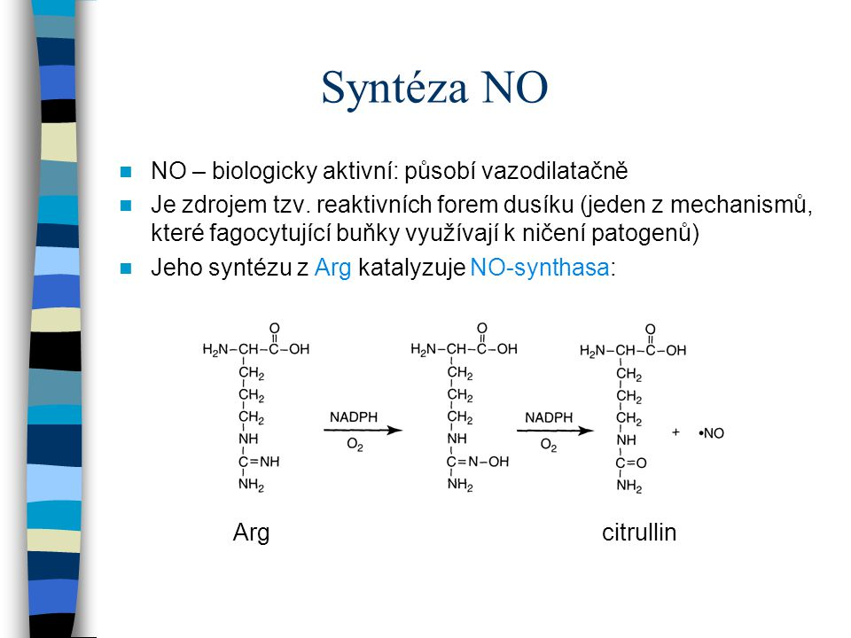 Syntéza NO NO – biologicky aktivní: působí vazodilatačně Je zdrojem tzv. reaktivních forem dusíku (jeden z mechanismů, které fagocytující buňky využív