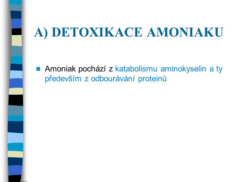 A) DETOXIKACE AMONIAKU Amoniak pochází z katabolismu aminokyselin a ty především z odbourávání proteinů