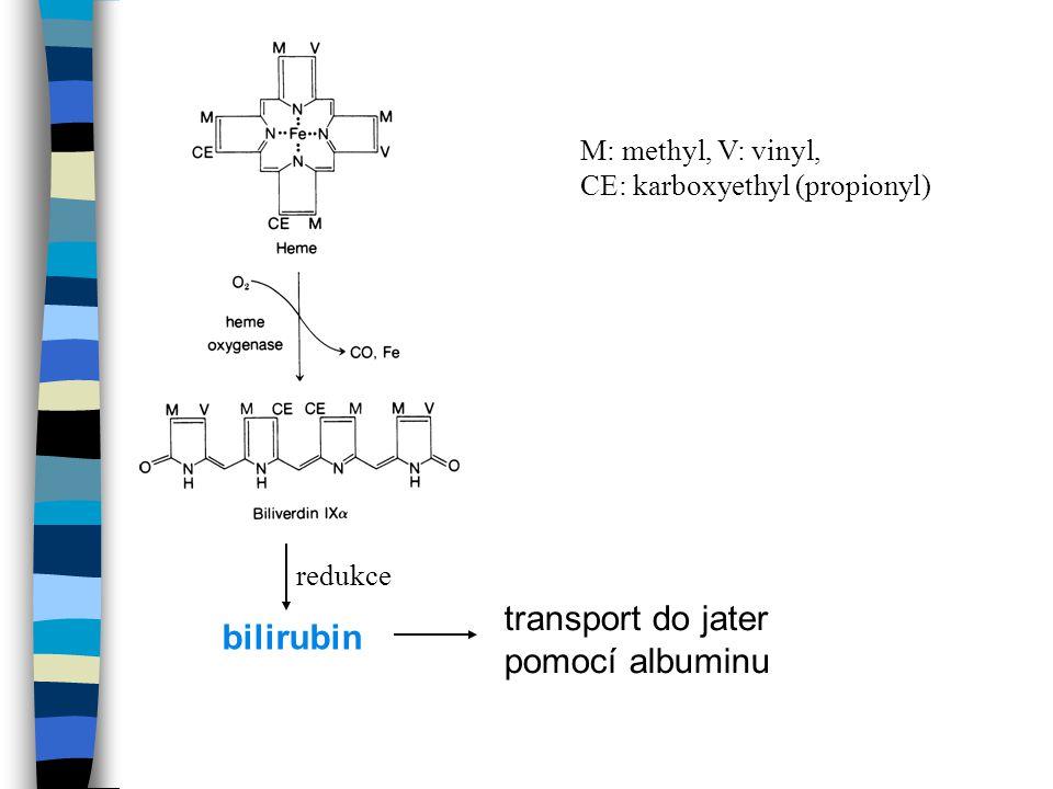 transport do jater pomocí albuminu M: methyl, V: vinyl, CE: karboxyethyl (propionyl) bilirubin redukce