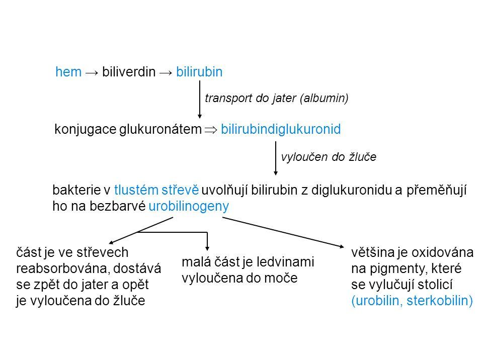 hem → biliverdin → bilirubin transport do jater (albumin) konjugace glukuronátem  bilirubindiglukuronid vyloučen do žluče bakterie v tlustém střevě u