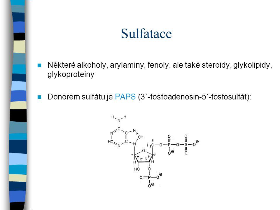 Sulfatace Některé alkoholy, arylaminy, fenoly, ale také steroidy, glykolipidy, glykoproteiny Donorem sulfátu je PAPS (3´-fosfoadenosin-5´-fosfosulfát)