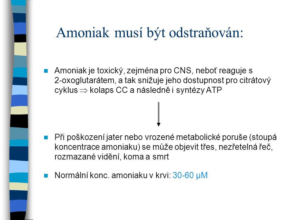 Amoniak musí být odstraňován: Amoniak je toxický, zejména pro CNS, neboť reaguje s 2-oxoglutarátem, a tak snižuje jeho dostupnost pro citrátový cyklus