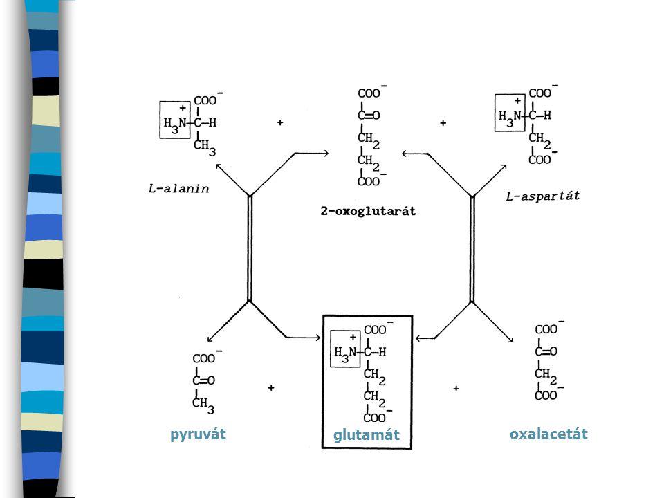 Glukuronidace Donorem glukuronátu je UDP-glukuronová kyselina: Jako glukuronidy jsou vylučovány např.: kys.