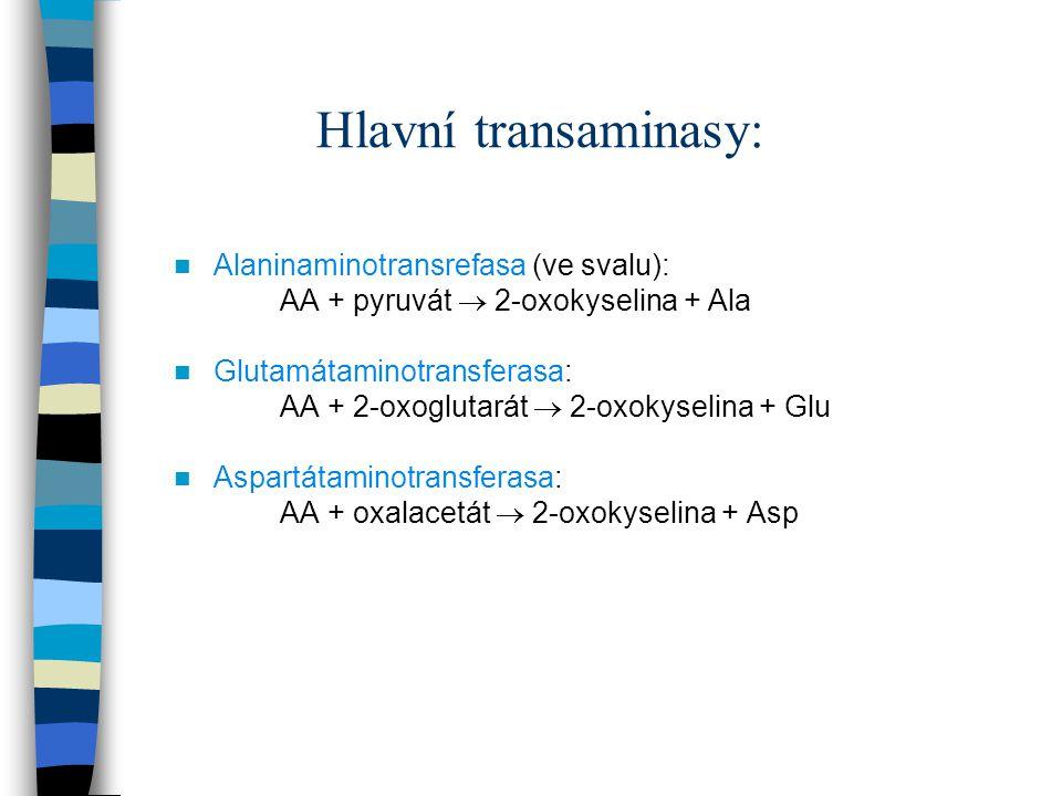 Hlavní transaminasy: Alaninaminotransrefasa (ve svalu): AA + pyruvát  2-oxokyselina + Ala Glutamátaminotransferasa: AA + 2-oxoglutarát  2-oxokyselin