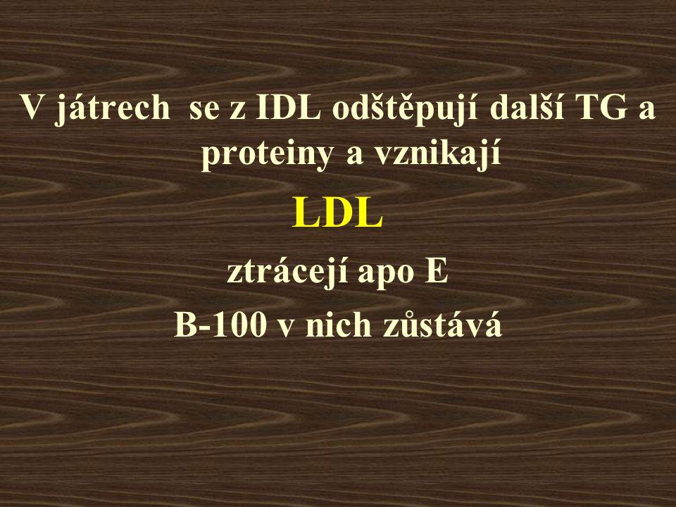 V játrech se z IDL odštěpují další TG a proteiny a vznikají LDL ztrácejí apo E B-100 v nich zůstává