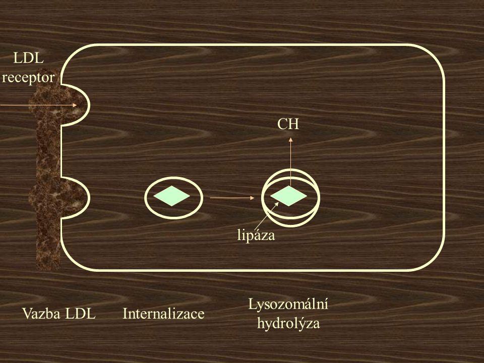 LDL receptor Vazba LDLInternalizace lipáza CH Lysozomální hydrolýza