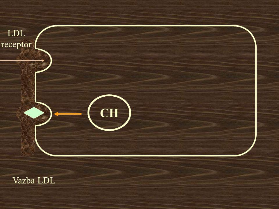 LDL receptor Vazba LDL CH