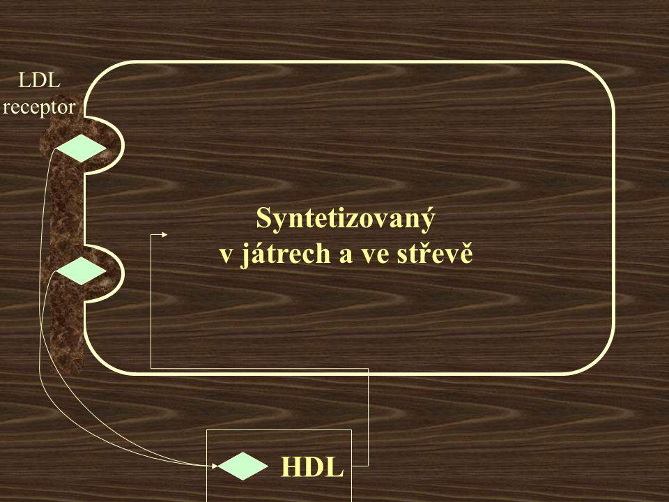 LDL receptor HDL Syntetizovaný v játrech a ve střevě