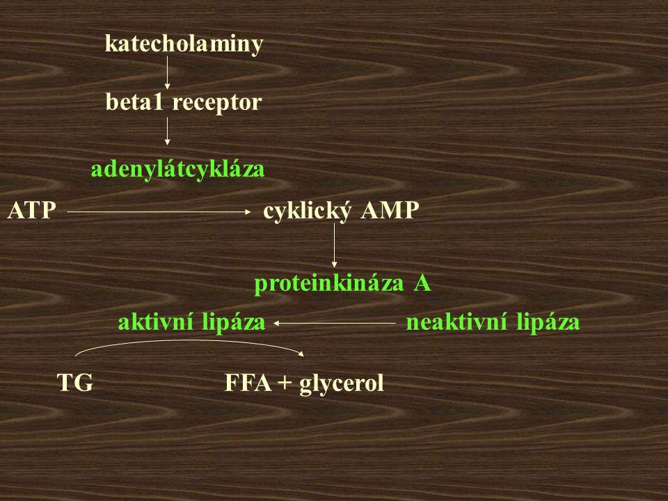 katecholaminy beta1 receptor adenylátcykláza ATPcyklický AMP proteinkináza A neaktivní lipázaaktivní lipáza TGFFA + glycerol