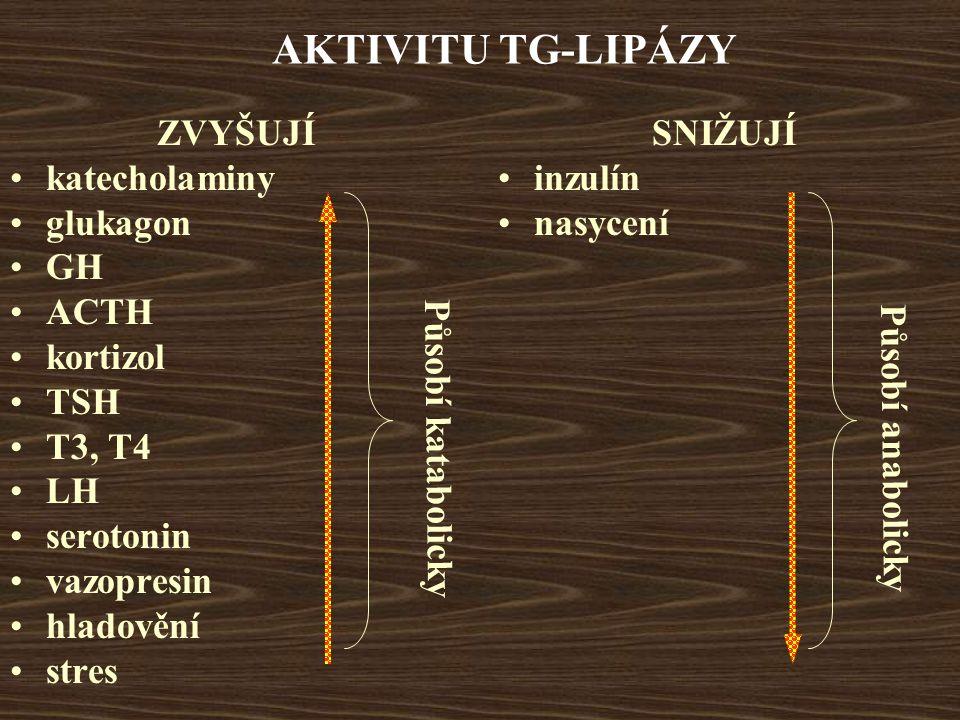 AKTIVITU TG-LIPÁZY ZVYŠUJÍ katecholaminy glukagon GH ACTH kortizol TSH T3, T4 LH serotonin vazopresin hladovění stres SNIŽUJÍ inzulín nasycení Působí