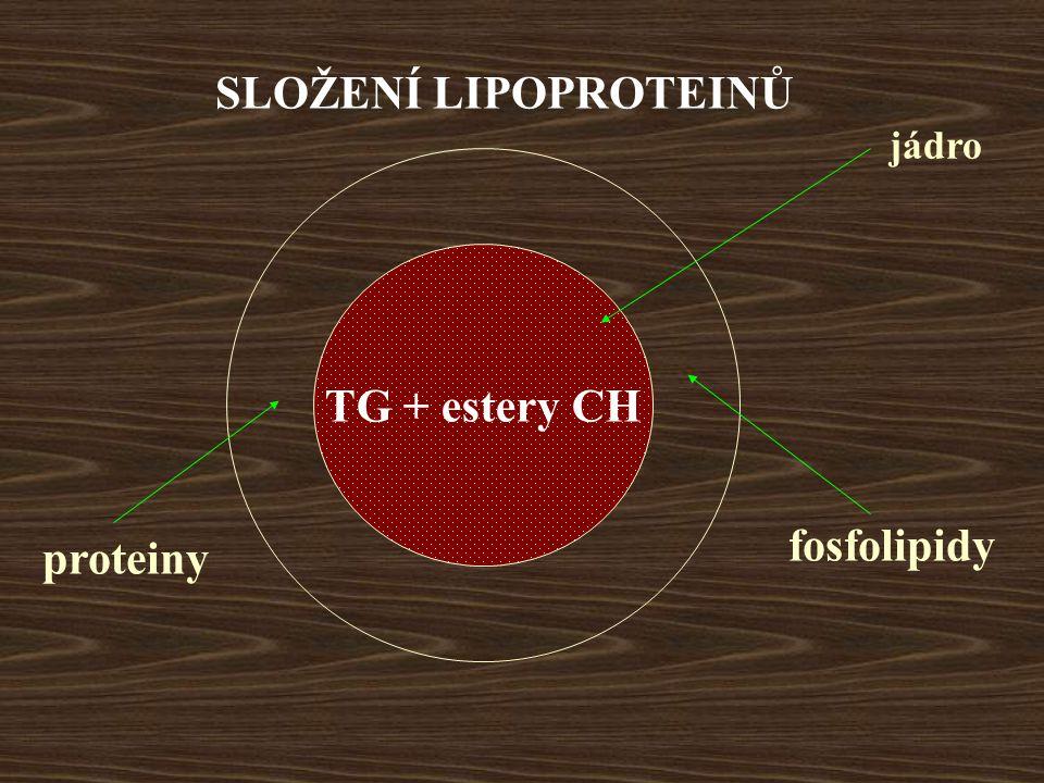TG + estery CH SLOŽENÍ LIPOPROTEINŮ jádro fosfolipidy proteiny