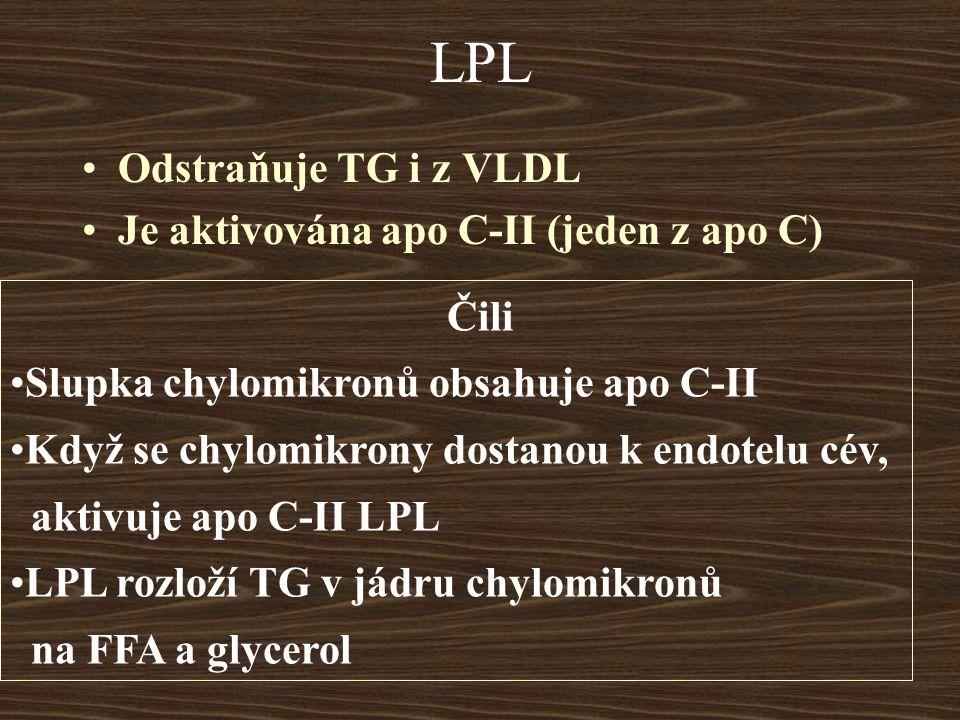 LPL Odstraňuje TG i z VLDL Je aktivována apo C-II (jeden z apo C) Čili Slupka chylomikronů obsahuje apo C-II Když se chylomikrony dostanou k endotelu cév, aktivuje apo C-II LPL LPL rozloží TG v jádru chylomikronů na FFA a glycerol