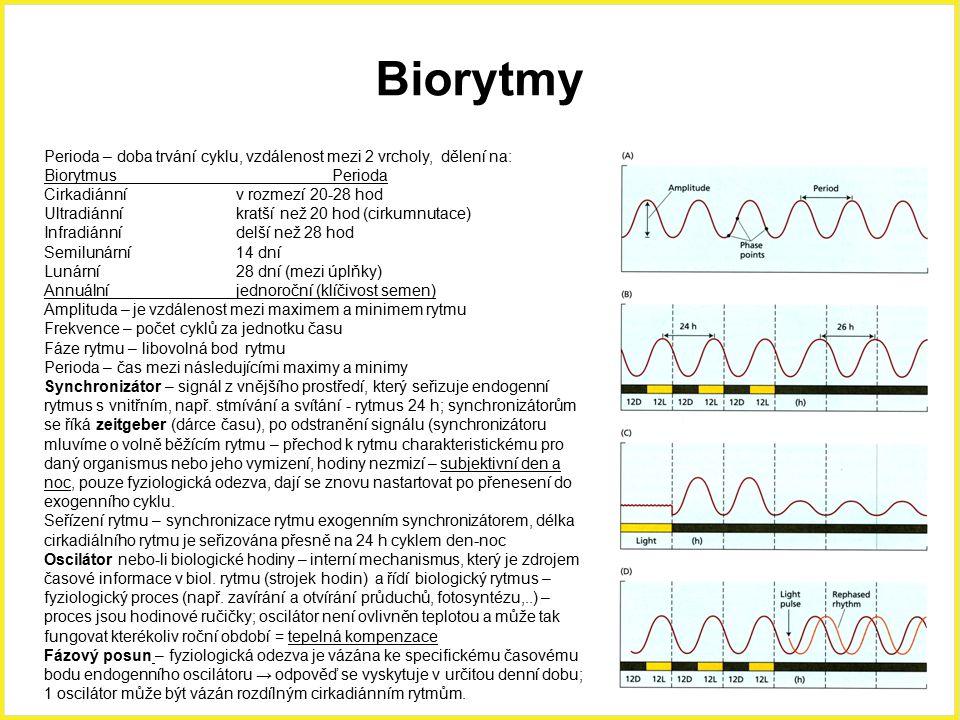Biorytmy Perioda – doba trvání cyklu, vzdálenost mezi 2 vrcholy, dělení na: BiorytmusPerioda Cirkadiánnív rozmezí 20-28 hod Ultradiánníkratší než 20 h