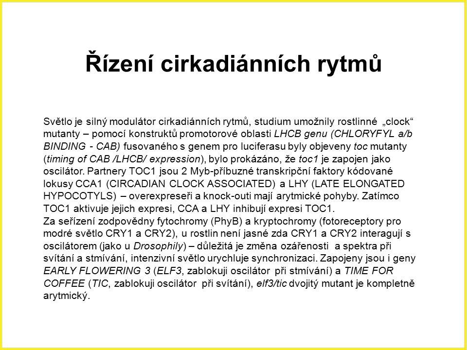 """Světlo je silný modulátor cirkadiánních rytmů, studium umožnily rostlinné """"clock"""" mutanty – pomocí konstruktů promotorové oblasti LHCB genu (CHLORYFYL"""