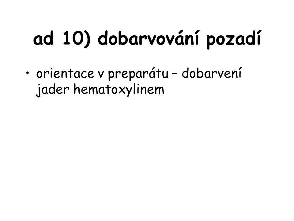 ad 10) dobarvování pozadí orientace v preparátu – dobarvení jader hematoxylinem