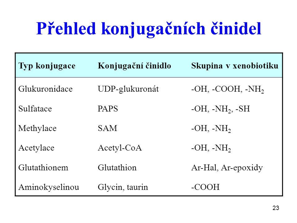 23 Přehled konjugačních činidel Typ konjugaceKonjugační činidloSkupina v xenobiotiku Glukuronidace Sulfatace Methylace Acetylace Glutathionem Aminokys
