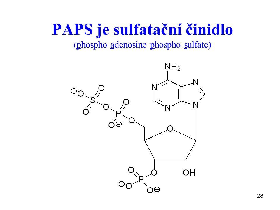 28 PAPS je sulfatační činidlo ( phospho adenosine phospho sulfate)