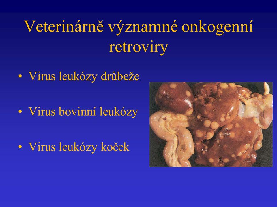 Veterinárně významné onkogenní retroviry Virus leukózy drůbeže Virus bovinní leukózy Virus leukózy koček