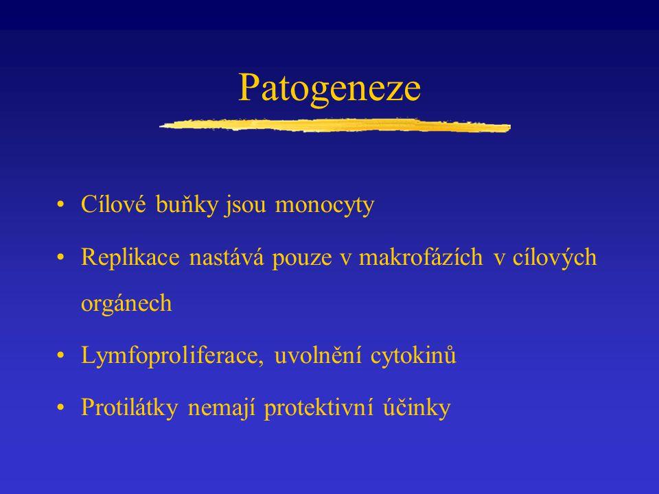 Patogeneze Cílové buňky jsou monocyty Replikace nastává pouze v makrofázích v cílových orgánech Lymfoproliferace, uvolnění cytokinů Protilátky nemají