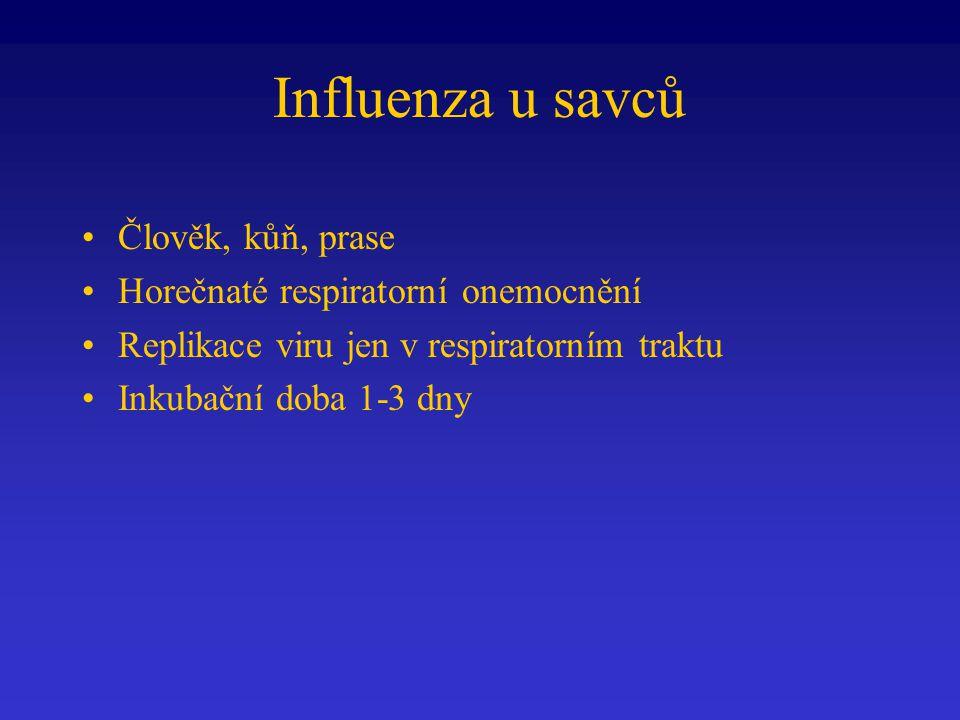 Influenza u savců Člověk, kůň, prase Horečnaté respiratorní onemocnění Replikace viru jen v respiratorním traktu Inkubační doba 1-3 dny