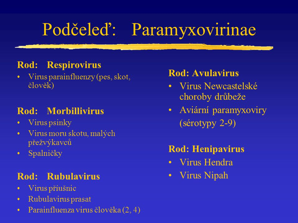 Podčeleď:Paramyxovirinae Rod: Respirovirus Virus parainfluenzy (pes, skot, člověk) Rod: Morbillivirus Virus psinky Virus moru skotu, malých přežvýkavc