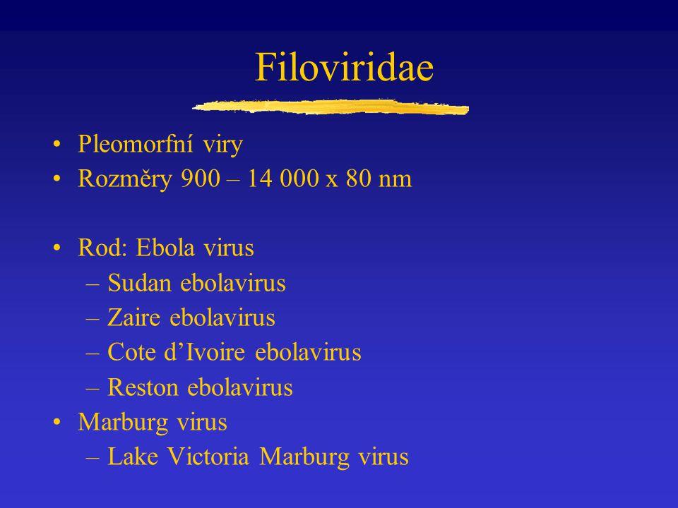 Filoviridae Pleomorfní viry Rozměry 900 – 14 000 x 80 nm Rod: Ebola virus –Sudan ebolavirus –Zaire ebolavirus –Cote d'Ivoire ebolavirus –Reston ebolav