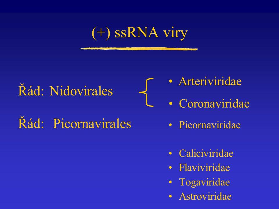 (+) ssRNA viry Řád: Nidovirales Picornaviridae Caliciviridae Flaviviridae Togaviridae Astroviridae Arteriviridae Coronaviridae Řád: Picornavirales