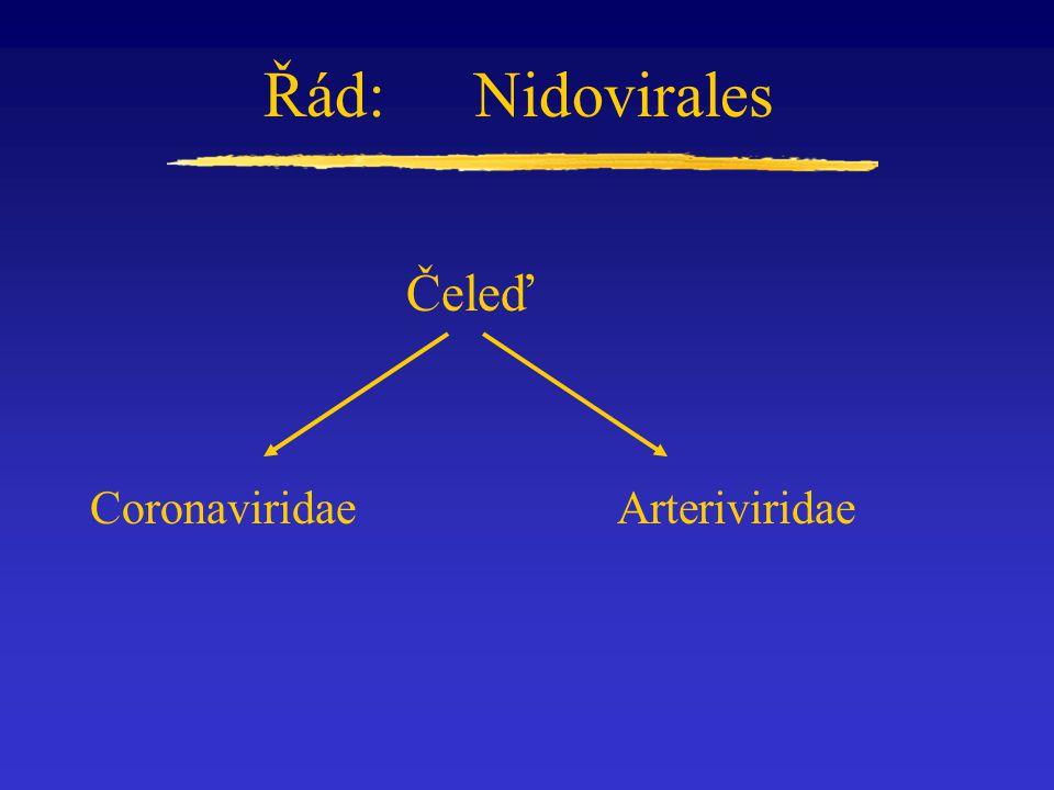 Řád:Nidovirales Čeleď CoronaviridaeArteriviridae