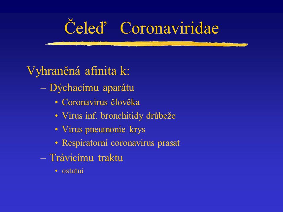 Čeleď Coronaviridae Vyhraněná afinita k: –Dýchacímu aparátu Coronavirus člověka Virus inf. bronchitidy drůbeže Virus pneumonie krys Respiratorní coron