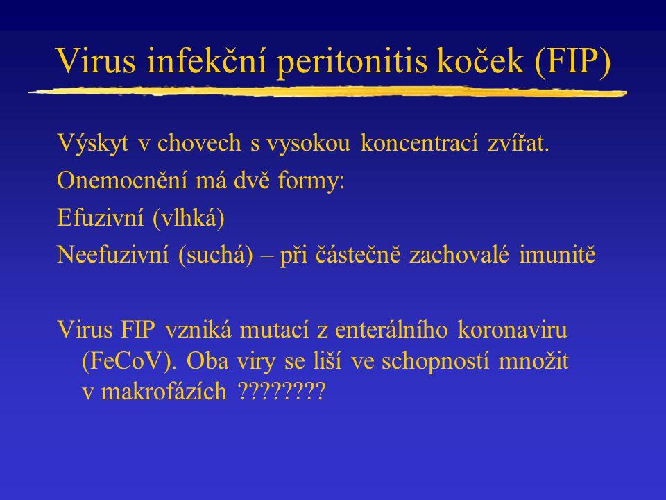 Virus infekční peritonitis koček (FIP) Výskyt v chovech s vysokou koncentrací zvířat. Onemocnění má dvě formy: Efuzivní (vlhká) Neefuzivní (suchá) – p