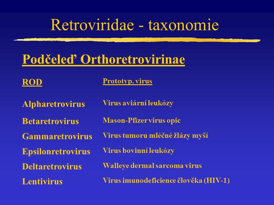 Retroviridae - taxonomie ROD Prototyp. virus Alpharetrovirus Virus aviární leukózy Betaretrovirus Mason-Pfizer virus opic Gammaretrovirus Virus tumoru