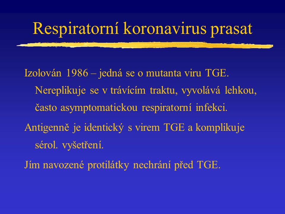 Respiratorní koronavirus prasat Izolován 1986 – jedná se o mutanta viru TGE. Nereplikuje se v trávícím traktu, vyvolává lehkou, často asymptomatickou