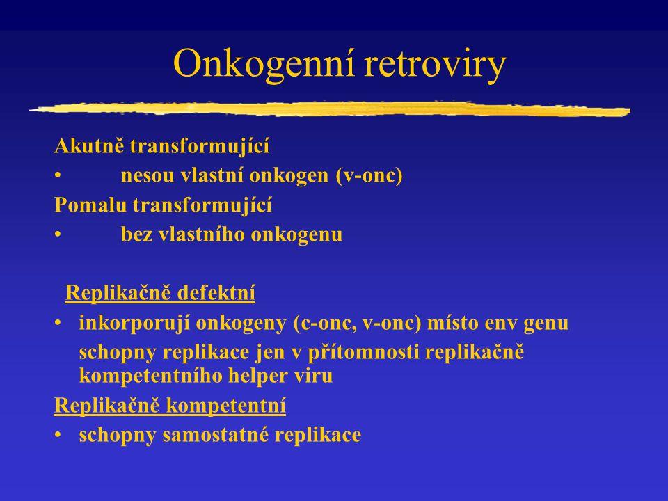 Onkogenní retroviry Akutně transformující nesou vlastní onkogen (v-onc) Pomalu transformující bez vlastního onkogenu Replikačně defektní inkorporují o