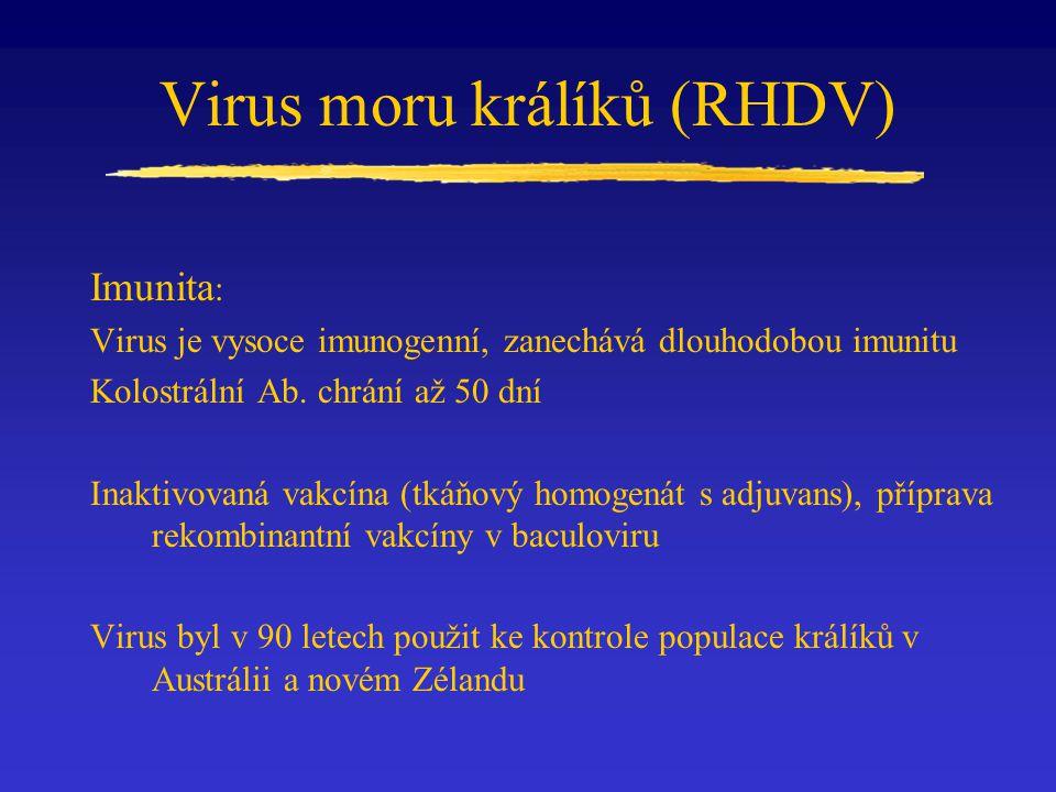 Virus moru králíků (RHDV) Imunita : Virus je vysoce imunogenní, zanechává dlouhodobou imunitu Kolostrální Ab. chrání až 50 dní Inaktivovaná vakcína (t